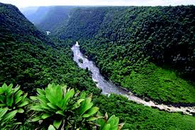 i-guyana-r-forest-images-16